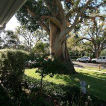 tree-framed-americana-1-07