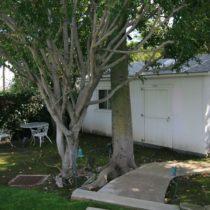 tree-framed-americana-1-73
