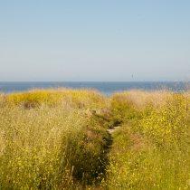 Path to the Beach - 01