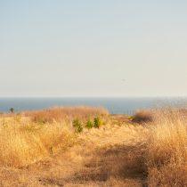 Path to the Beach - 11